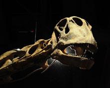 Dinosaur-Ruffo221